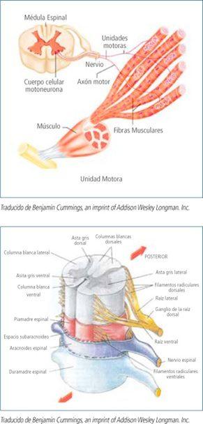 neurologia-enfermedades-neuromusculares